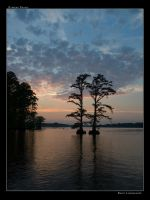Cypress Couple by linkf1