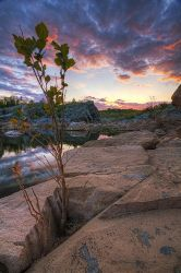 The Watcher - Great Falls, MD by Mashuto