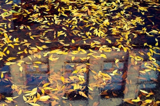 october puddle by RockTheLife