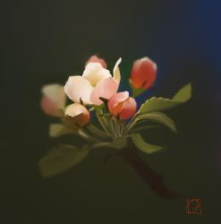 Apple flowers by GaudiBuendia