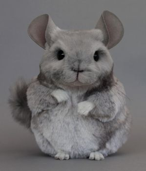 Ollie the Chinchilla by LisaAP