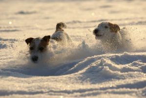 Playtime on the snow by Goodka8