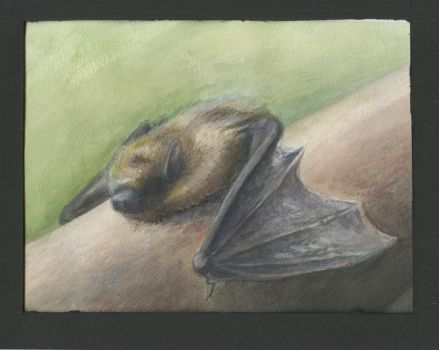 From Life: Bat by AM-Nyeht