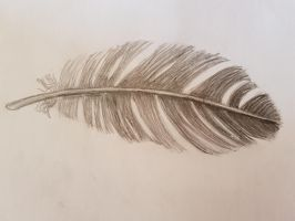 feather by rainbow-falls