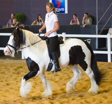 STOCK - 2014 Total Equine Expo-86 by fillyrox