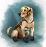 Hero-rescue dog S19 by Dr-Stain
