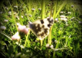 butterfly by ArisAnthopoulos