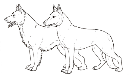 German shepherd dog colouring page by novablue