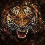 angry tiger by cherryfoxy69