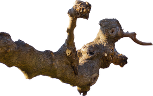 Tree Branch Cutout PNG by Andrei-Oprinca