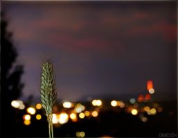 Grain For The City by LeWelsch