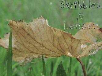 Leaf 2 | Set DLM by SkriBlerLenZ