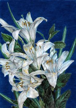 lilies by naglets