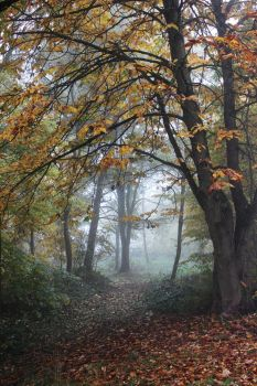 Autumn Path by Caillean-Photography