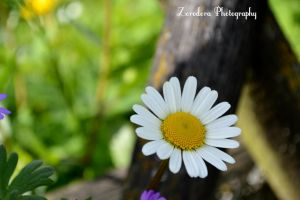 Growing In The Shadow by Zorodora