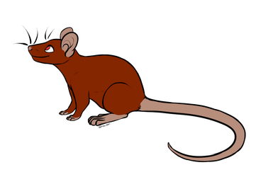 TheForgottenLioness' Ratty 501 by Pitter-Paws-Rattery