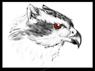 Goshawk Griffin by Fortunes-Favor