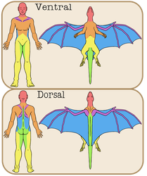 Damage Mapping Between the Esarian and Human Form by Chikara-Redwing