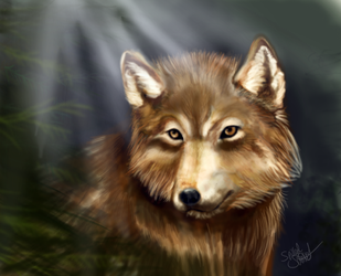 Jacob by Spilled-Sunlight