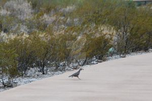 Run Quail Run! by oddjester