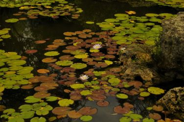 lilly pond by tytaniafairy