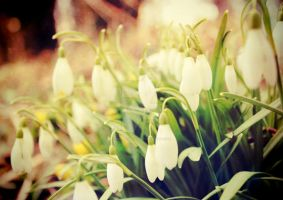 Snowdrops by MagpieMagic