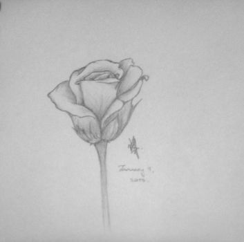 Pencil Flower by CauseLife