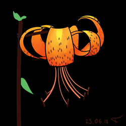 Tiger Lily by lrkis