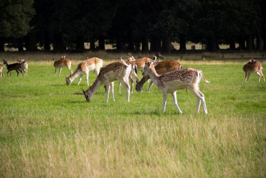 Richmond Park, London, September 2015 by LouHartphotography