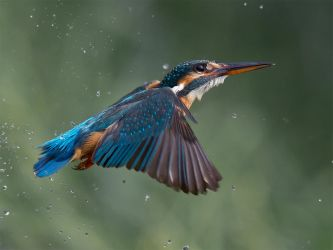 hovering kingfisher by Jamie-MacArthur