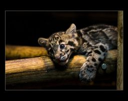 Tiny Clouded Leopard by sekhmet-neseret