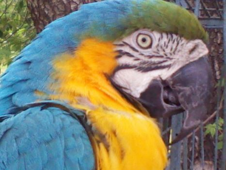 Gilligan the Parrot photograph by ArtisticAnri