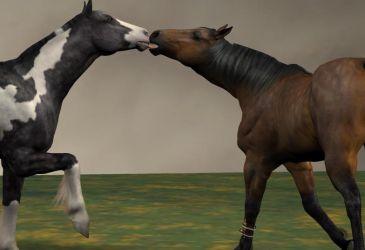 you should run 8 3rd person by horsefood