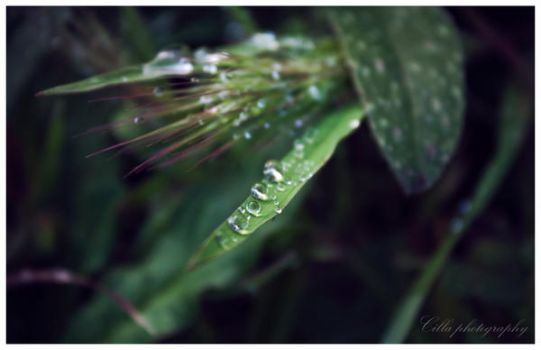 Drops by OnlyCilla