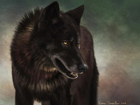 Black Wolf II by makangeni