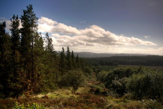 View from Old Man's Head by finkycake