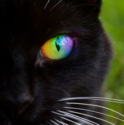 Rainbow Cat Eye by digitalsprite