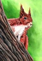 Red Squirrel by grim1978