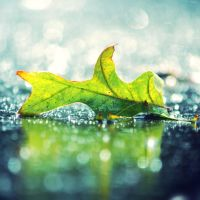 Green Leaf by incolor16