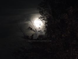 moon on the trees by amitm123