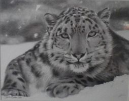 snow leopard by sarahxboston