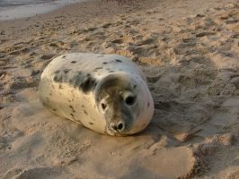 seal by iskra85