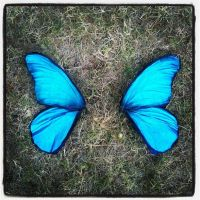 Blue Morpho costume wings by S0WIL0