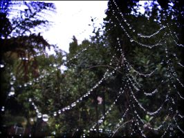Drops on a web by sampsonx