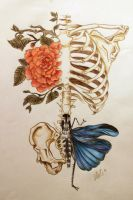 RibCage by McStAr182