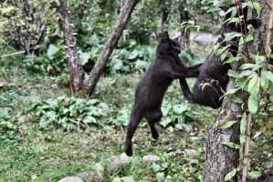 Kitties get crazy jumping 1 by Abrimaal