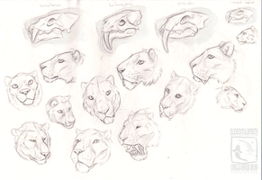 Sabertooth Studies by ElementalSpirits