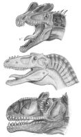 Heads of theropods 2 by tuomaskoivurinne