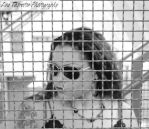 Caged by CinderPhoto