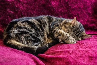 The Nose Covered Catnap by Kitteh-Pawz